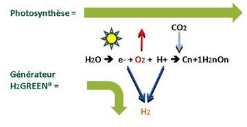 h2green-photosynthese-2